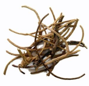 Silene capensis African dream root