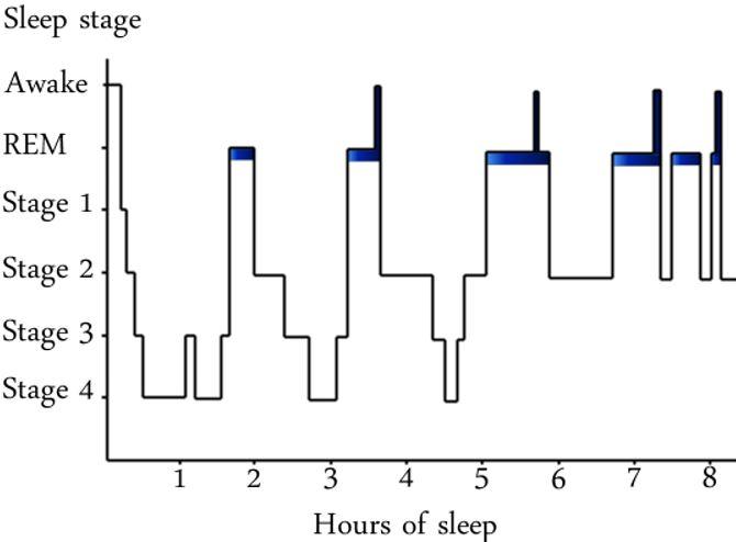 Sleeping Cycle
