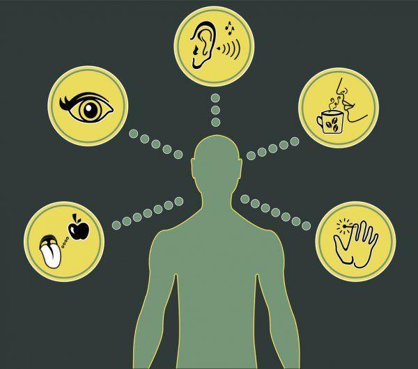 5 senses of SSILD