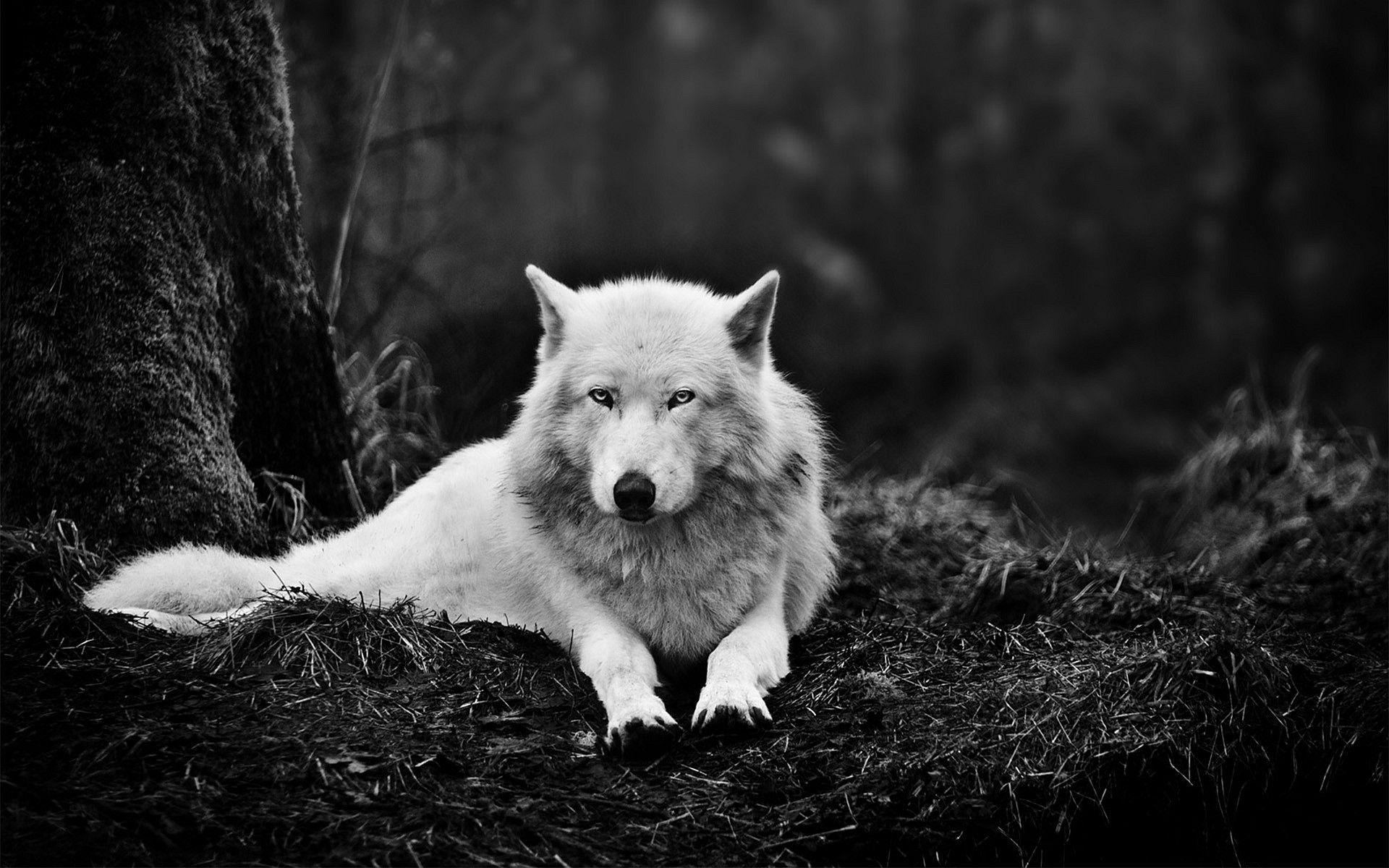 Dreaming about wolves