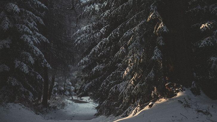 dark snow meaning