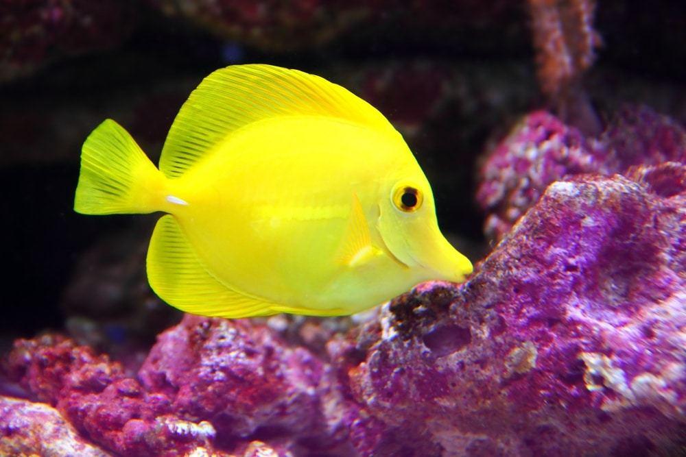 do yellow fish sleep?