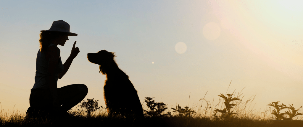 Interpretations about dreaming of dogs