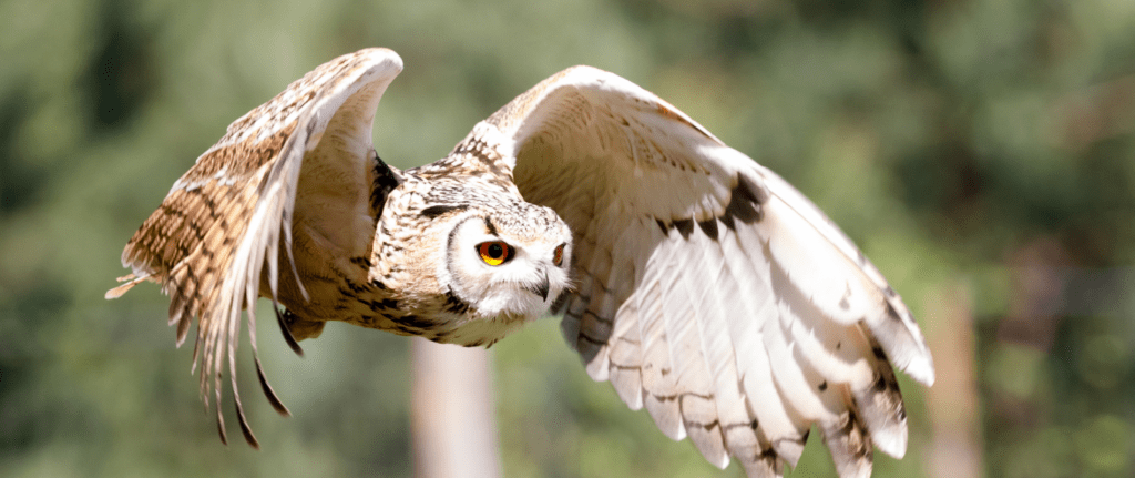 Dreaming about owls